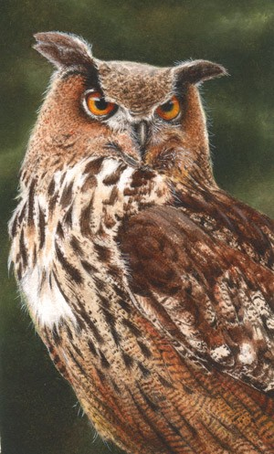 Eagle owl miniature painting by Tracy Hall