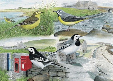 Wagtails watercolour painting by tracy hall