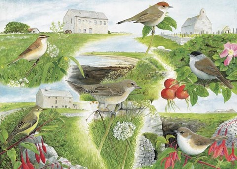 Warblers watercolour painting by Tracy Hall Orkney Book of Birds