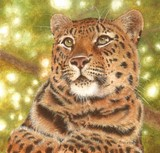 amur leopard miniature painting by Tracy Hall