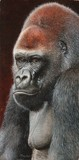 silverback gorilla miniature painting by tracy hall