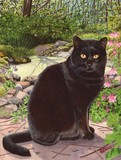 black cat watercolour painting pet portrait by tracy hall